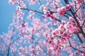 Primavera in versi (classe 5A primaria Teora)